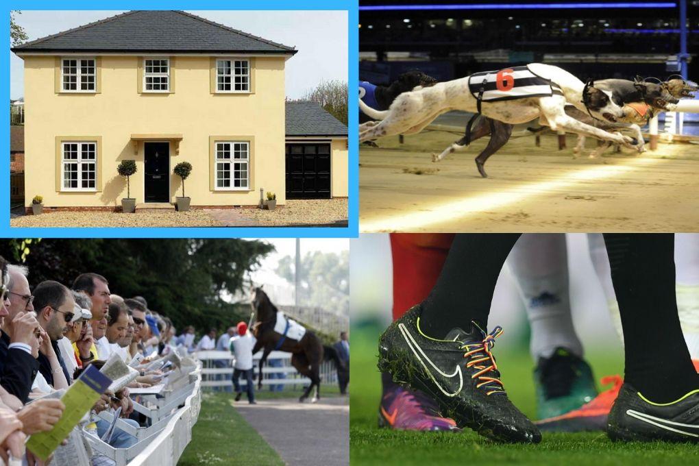house betting horse greyhound
