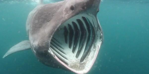 20 Que Comen Los Tiburones Pictures And Ideas On Meta Networks