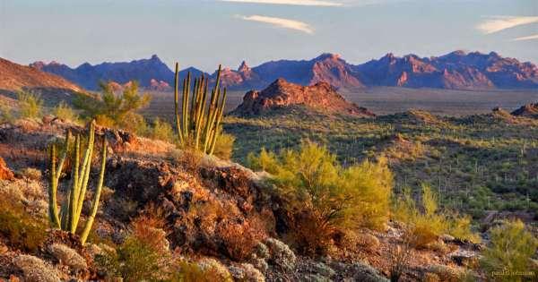 desert landscapes - shindig 2015
