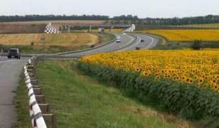 дорога,подсолнухи,лето,желтое