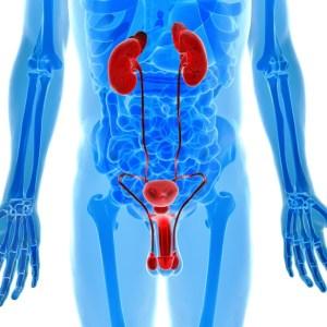 Ostéopathie urinaire - Ostéopathe Bordeaux Caudéran