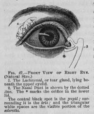 Front View of Right Eye