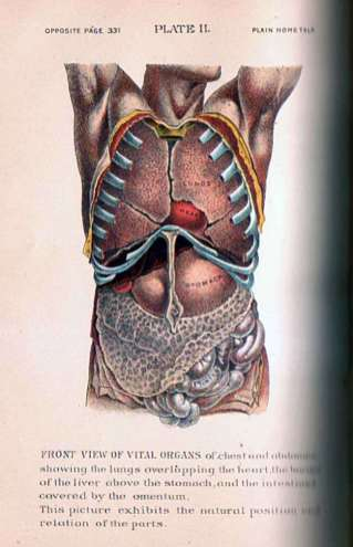 Vital Organs of the Chest and Abdomen