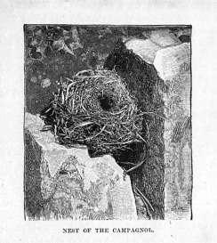 Campagnol Nest