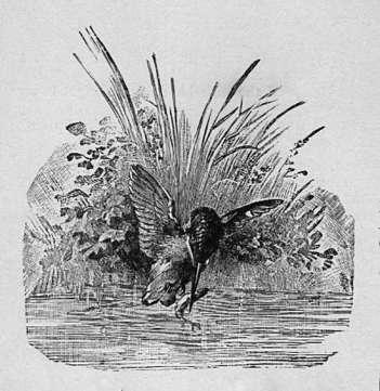 Bird catching Fish