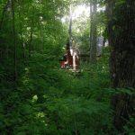 Woodlands Chalet