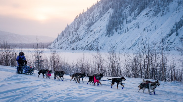 A dog musher and team are pictured outside Dawson City, Yukon - Pat Kane