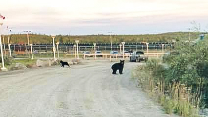 Bear sightings in Yellowknife and Hay River