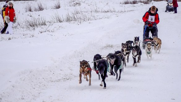 Brent Beck's dog team begins day one of the 2019 Aurora Ford Classic in Hay River