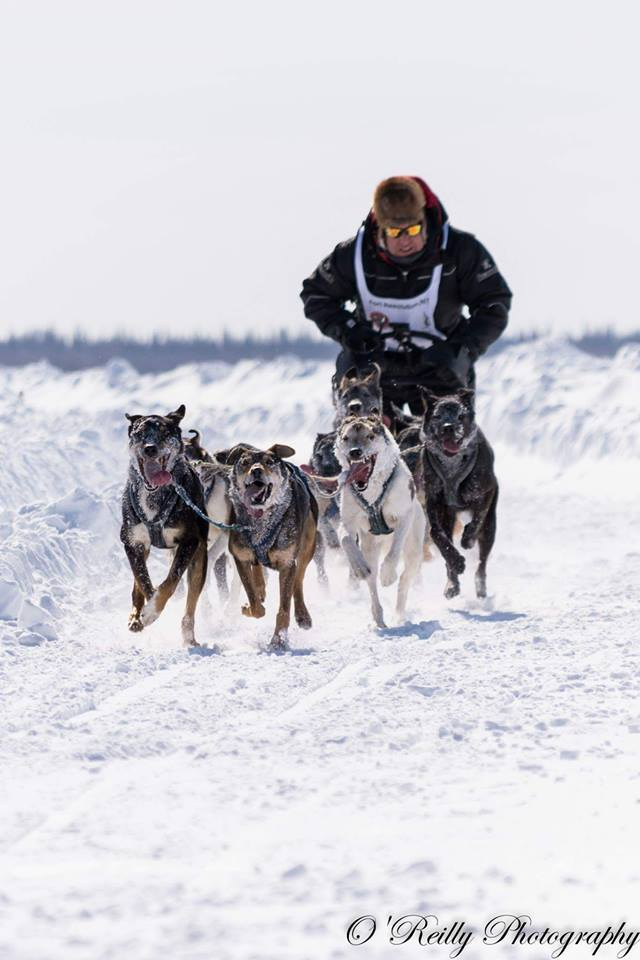 Canadian Championship Dog Derby: Who's competing in 2019