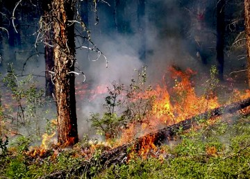 A file image of fire in a woodland area published online by the NWT's Department of Environment and Natural Resources