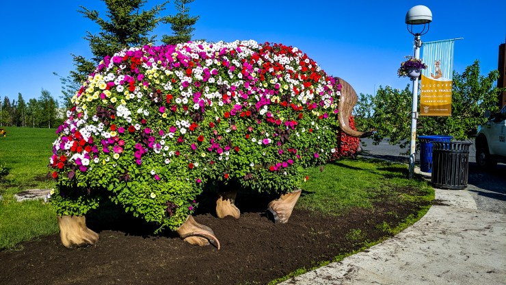 Earth is filled in beneath the newly restored Elon Muskox in Yellowknife's Somba K'e Park
