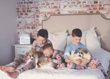 Jackson and his brothers, Dalyn (centre) and Owen (right), with their original three foster puppies from December 2018. Photo: Caitlin Cleveland