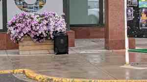 A suitcase sits next to flowers outside the Northwestel building