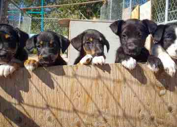 Puppies at a Kam Lake dog lot appear in a photo uploaded to Facebook by the Yellowknife Dog Trotters Association