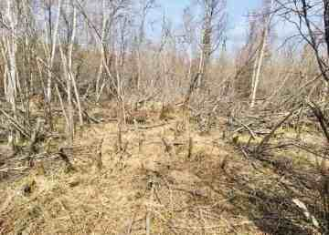 Several residents have raised concerns about trees being cut down in Yellowknife's Rotary Park
