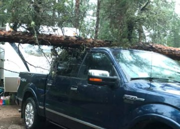 A submitted photo of a tree that landed on Alan Bowerman's truck - and didn't leave a scratch. Photo: Alan Bowerman