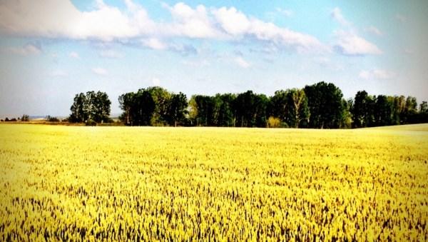 landscape palencia primavera