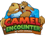camel encounter in cabo san lucas at wild canyon