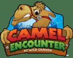 camel encounter in cabo san lucas at wild canyon