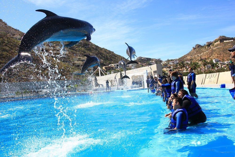 see the dolphins show off during the dolphin encounters cabo tour