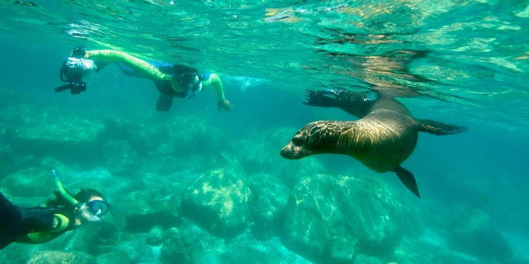 swim with the sealions at espiritu santo island