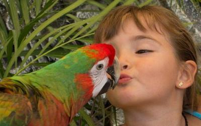 funs things for kids to do in cabo san lucas, girl kissing a parrot