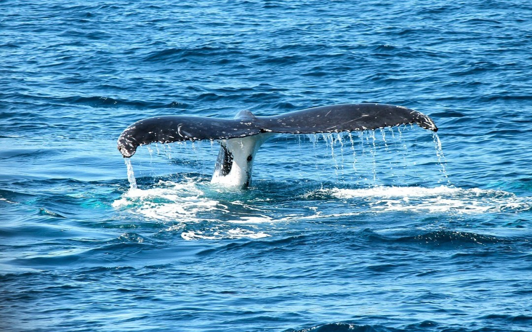 Things to do in Cabo San Lucas with Animals
