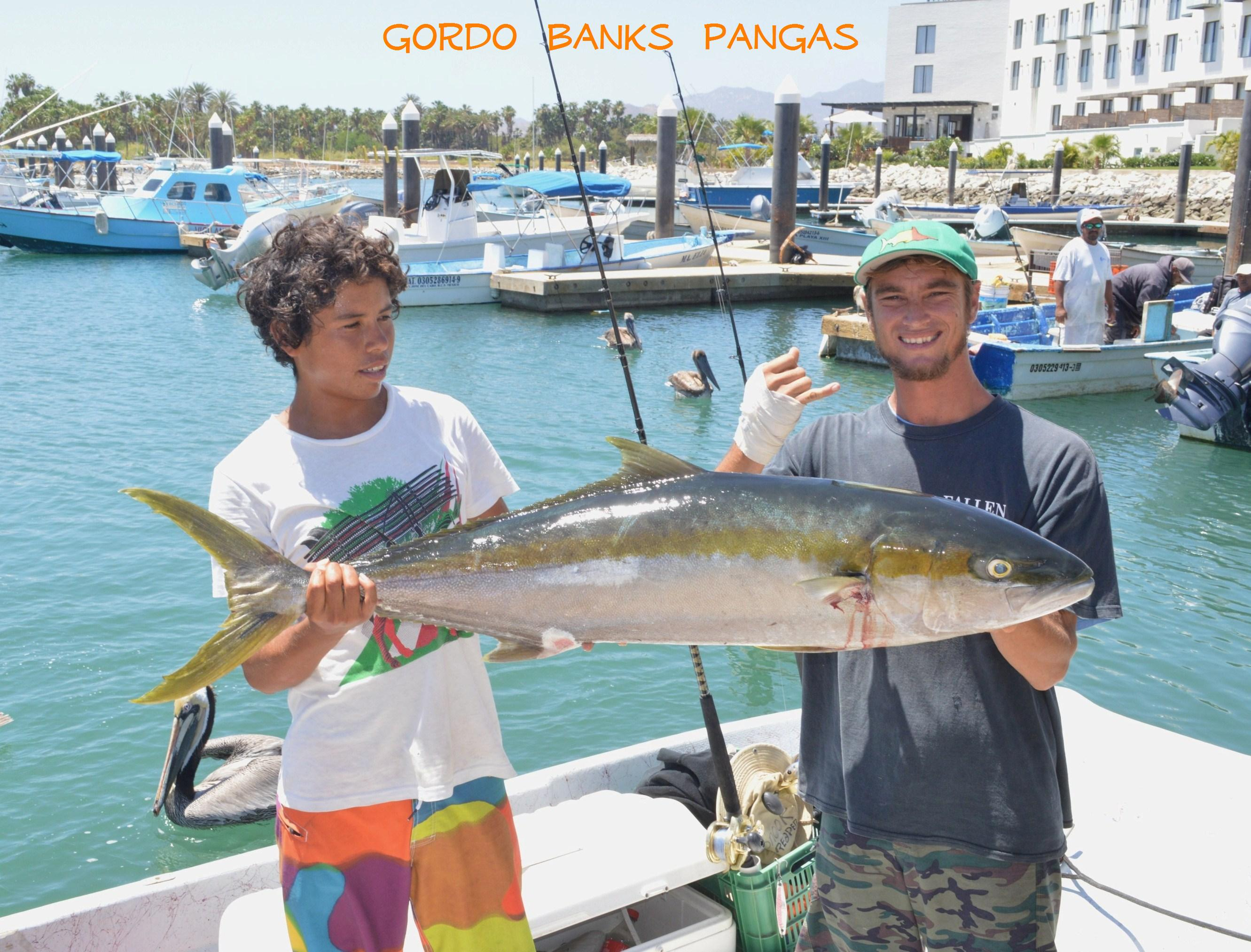 Los cabos fishing report cabo san lucas blog los cabos for Cabo san lucas fishing report