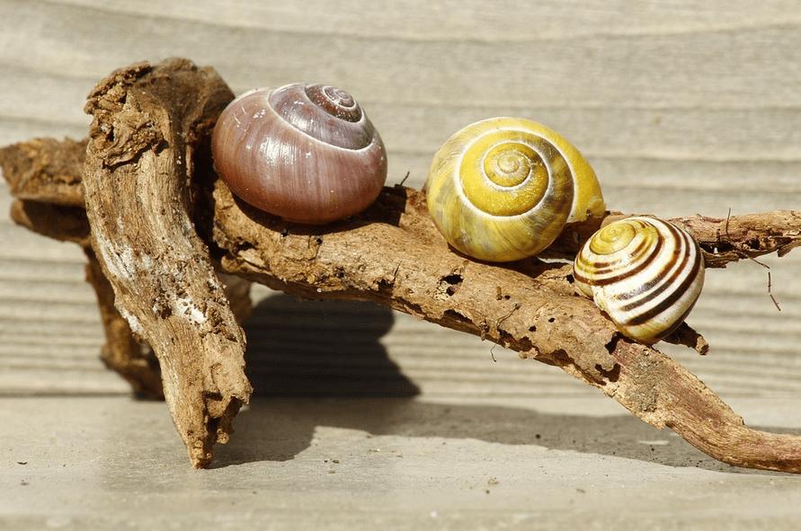 How Long Does A Snail Sleep