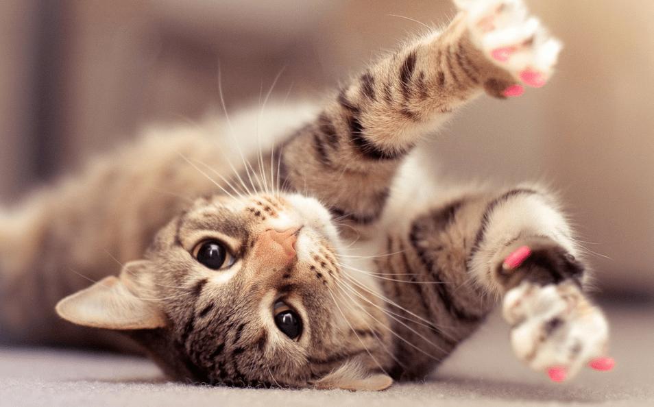 Are Cats Ticklish