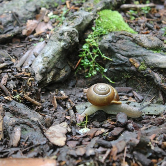 Snails of various shapes and sizes