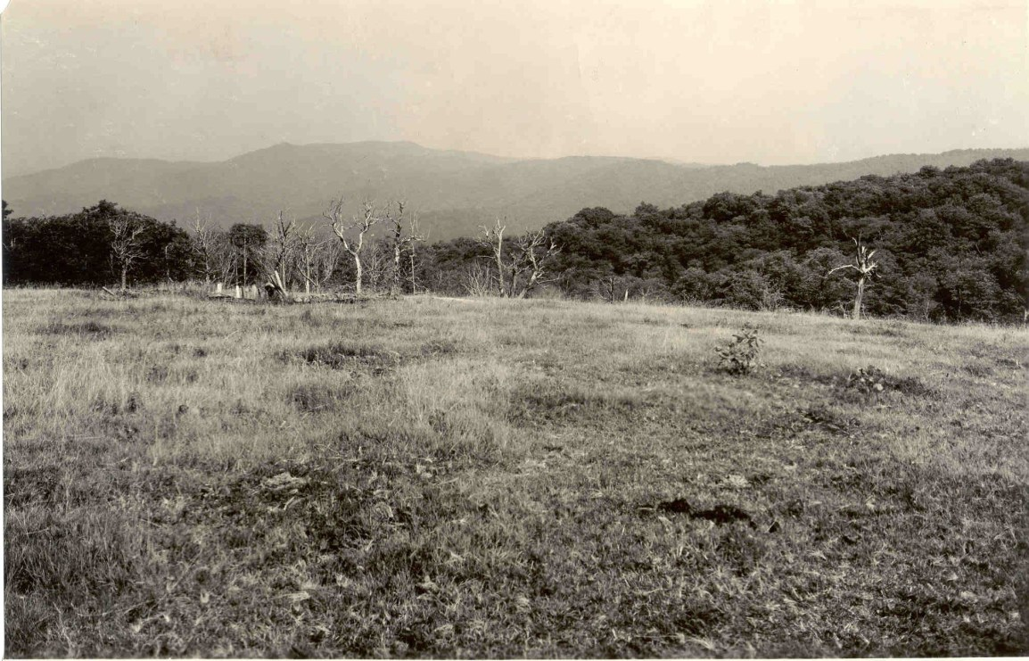 Sassafras_ridge_from_Whigg_Meadow (1)