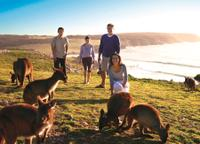 5-Day Adelaide and Kangaroo Island Tour Including Barossa Valley Wine Tasting