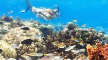 Marinarium - Atrações de Punta Cana