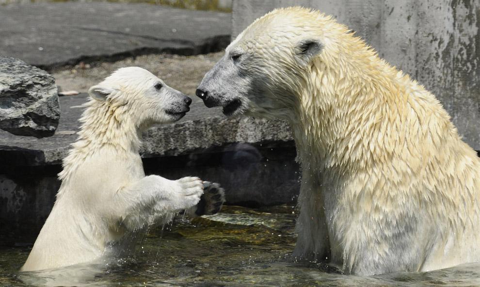 world animal day photos