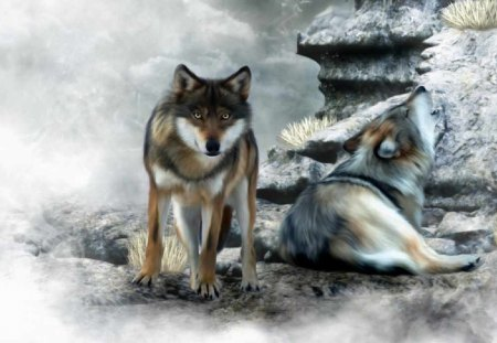 cute wolves dogs animals