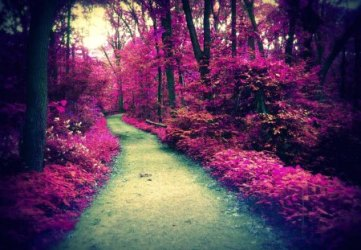 forest purple path comments wallpapers abstract desktop