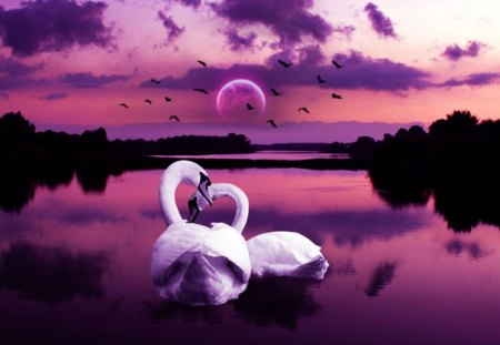 Swan Love  Birds  Animals Background Wallpapers on