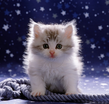 Cute Kitten Wallpaper Free Cute Fluffy Cats Amp Animals Background Wallpapers On