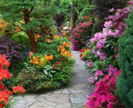 garden path - flowers & nature