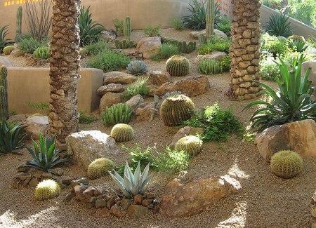 arizona cactus garden - deserts