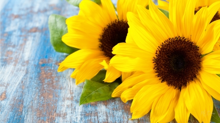 Fall Desktop Wallpaper With Sunflowers Bright Sunflowers Flowers Amp Nature Background Wallpapers