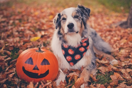 Fall Wallpaper Backgrounds Pumpkins Happy Halloween Dogs Amp Animals Background Wallpapers On