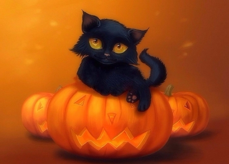 Black Cat Fall Wallpaper Halloween Kitten Cats Amp Animals Background Wallpapers On