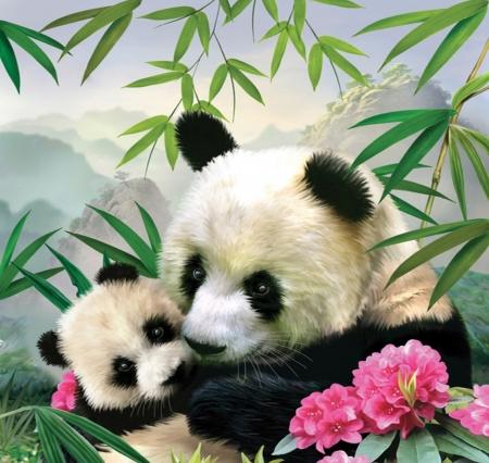 Cute Baby Bears Wallpaper Mountain Panda Bears Amp Animals Background Wallpapers On