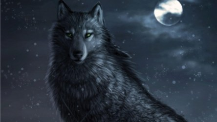Black Wolf Moon Other & Animals Background Wallpapers on Desktop Nexus Image 2366840