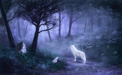 Enchanted Forest Fantasy & Abstract Background Wallpapers on Desktop Nexus Image 2401324