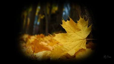 Fall Collage Wallpaper Fall Collage Golden Leaves Forces Of Nature Amp Nature