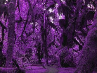 forest purple background nature desktop wallpapers cartoon nexus animal forests cute